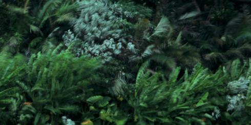 八重山の島々 -仲程長治の写真-