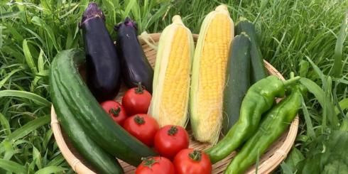 わかりやすい自家採種農業