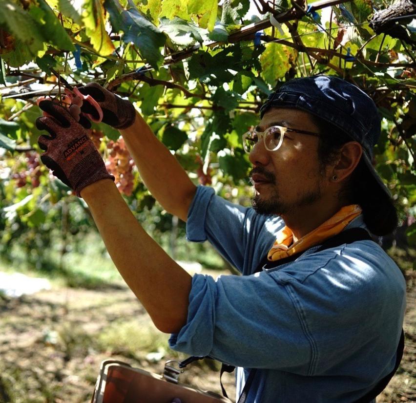 やまなし発酵紀行-甲州ワインと甲州味噌から学ぶ、山梨の発酵文化 -