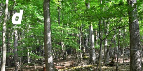 〈開催中止〉d SCHOOL「わかりやすい秩父の森」ーカエデの樹液を使った石鹸をつくろうー