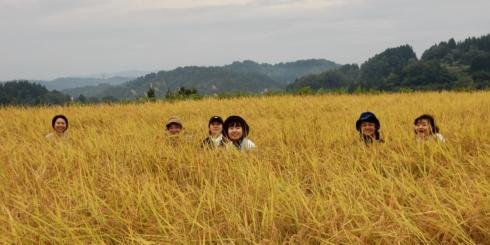 越後妻有にて棚田米を収穫